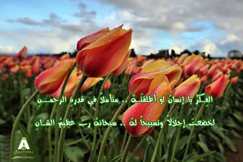 Photo of أنشودة : آيـــات